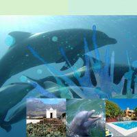 """Cursul """"Delfin"""" în Tenerife-2020"""